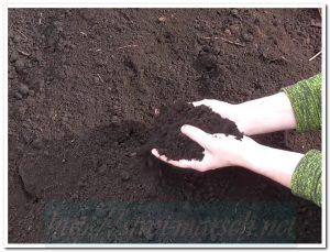 почва грунт в Твери цены с доставкой